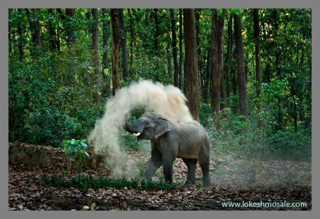 www.lokeshmosale.com